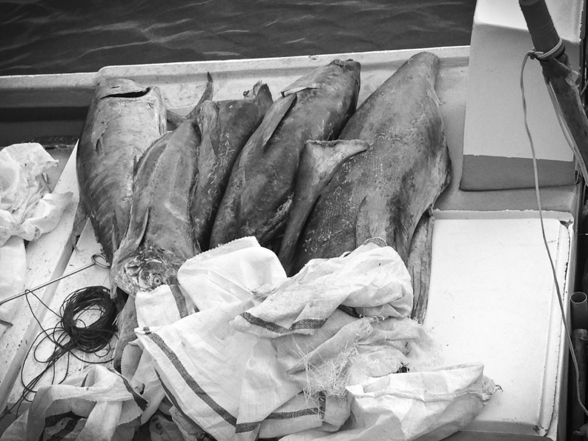 Mercurio en predadores marinos del Pacífico colombiano
