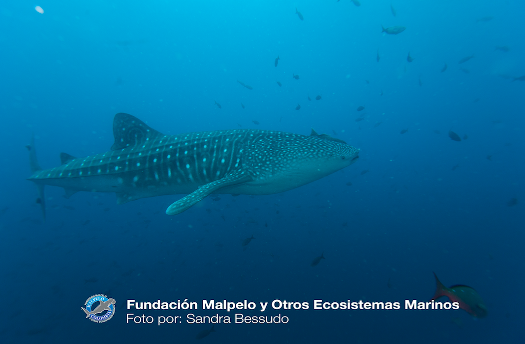 Mission Blue Hope Spot: Malpelo Island, Colombia