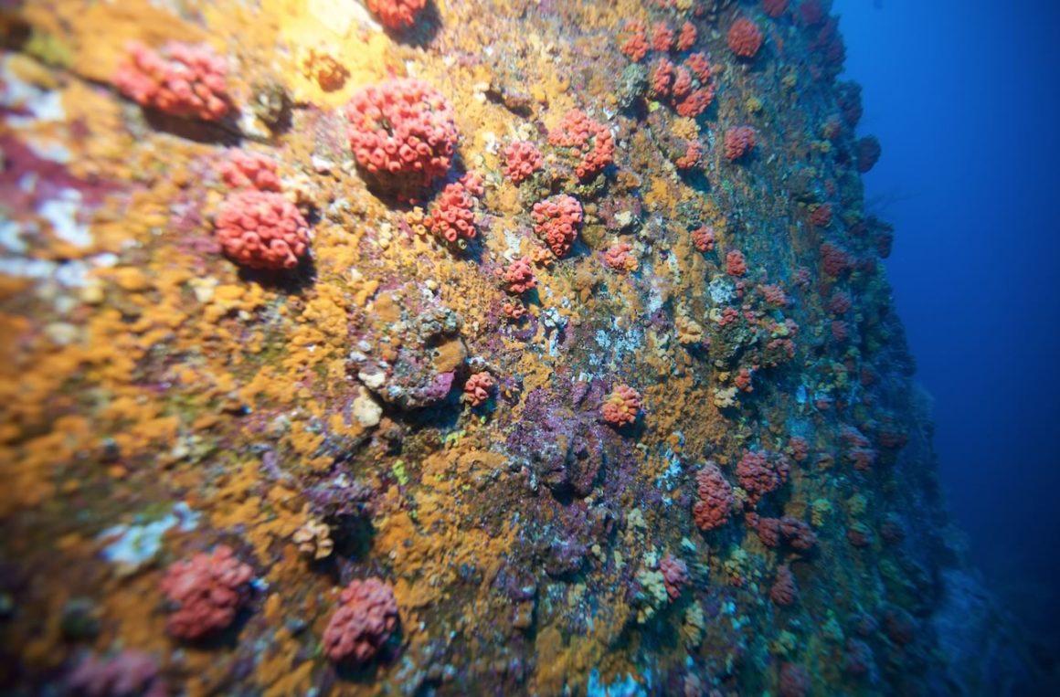 Submarinas