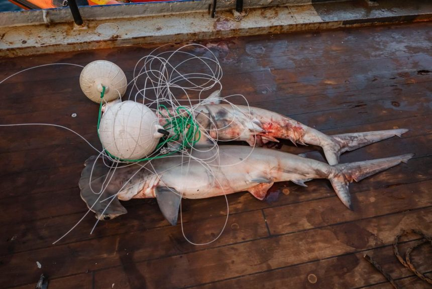Pesca ilegal en Malpelo 16 abril-2019