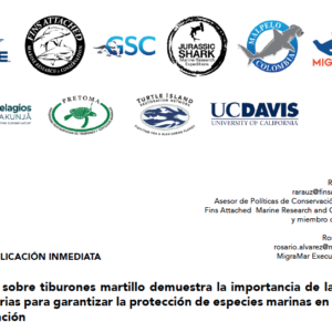 Estudio sobre tiburones martillo demuestra la importancia de las rutas migratorias