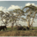 Diplomado de posgrado del Centro Recanati-Kaplan en la práctica internacional de conservación de la vida silvestre