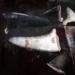 El Ministerio de Agricultura expidió una resolución permite que se usen las aletas de varias especies de tiburones, con fines comerciales.