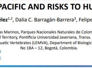 PAPER INFORMATIVO-MERCURIO EN LOS TIBURONES DEL PACIFICO COLOMBIANO